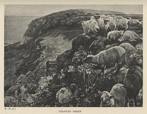 Strayed Sheep