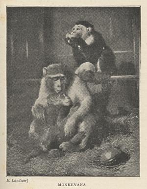 Monkeyana