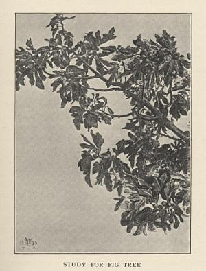 STUDY FOR FIG TREE