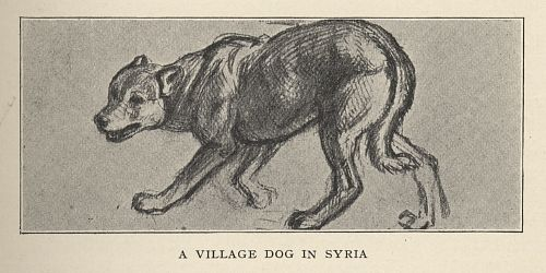 A VILLAGE DOG IN SYRIA