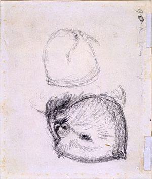 Sketch of a Dormouse